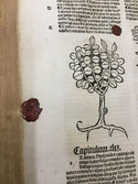 Red wax seal on page of book