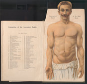 Fold-out chromolithograph illustrating an anatomical model of the male body, with a list of its different parts