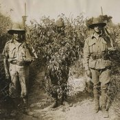 image of two ANZAC soldiers with rifles and bayonets between whom stand a man disguised by wearing a great profusion of branches and leaves with his face and a cloth hat barely visible at top and boots at the bottom