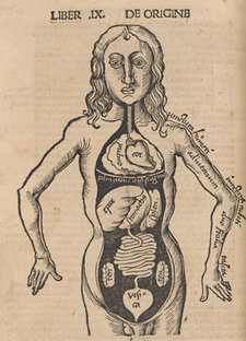 Woodcut illustration of thoracic and abdominal organs, with names of various organs and body parts