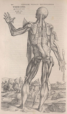 Woodcut anatomical illustration of a man, with structures under the skin and protective tissue exposed