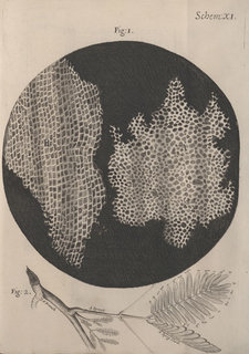 Copperplate engraving illustrating honeycomb-like structure observed under the microscope in a piece of cork, and a scientific illustration of a tree branch