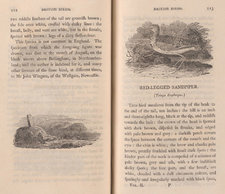 Wood engravings of a sandpiper bird and a man seated in the countryside, on facing pages