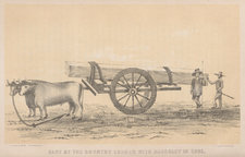 Cart laden with Cuban mahogany being towed by oxen, with overseers also present