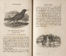 Wood engravings depicting a red-legged crow; aand a group of boys building a snowman