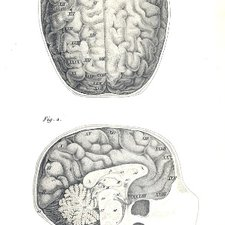 Anatomy of the brain as depicted in Gaspar Spurzheim's The anatomy of the brain, with a general view of the nervous system. London: published by S. Highley, 1826 [KCSMD Historical Collection QM455 SPU