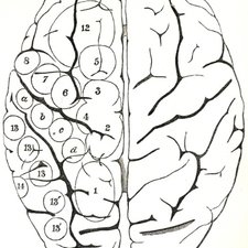 The location of various sensory and motor functions in the brain, from David Ferrier's The functions of the brain. London: Smith, Elder, 1876 [Institute of Psychiatry Historical Collection h/Fer]