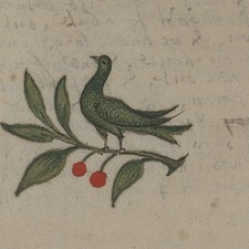 A guanumbi, or hummingbird, from the manuscript notes in our copy of Richard Ligon's A true & exact history of the island of Barbadoes … London: printed, and are to be sold by Peter Parker, and Thomas Guy, 1673 [Rare Books Collection FOL. F2041.L6]