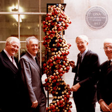 four men, two either side of a model of the DNA double helix molecule expressed in coloured spheres